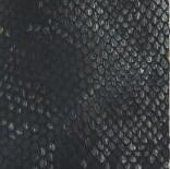 Serpent/Noir